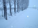 Alameda Cubierta de nieve