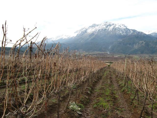 patagonian wines