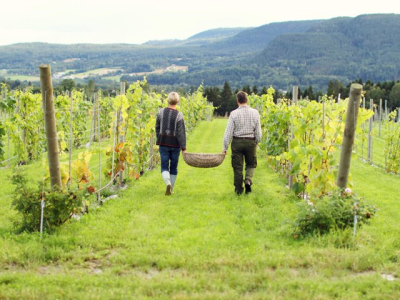 Lerkekåsa Vineyard